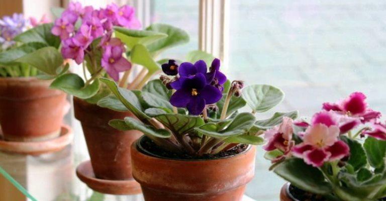 Melhores flores para você cultivar em casa