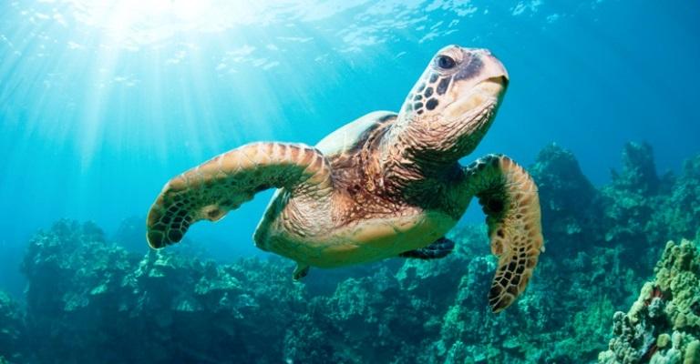Lei que protege biodiversidade marinha é aprovada