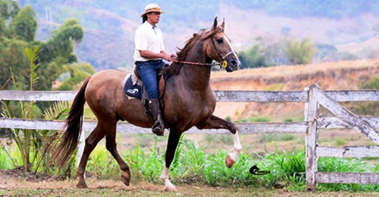 Exposição em BH reúne cavalos Campolina