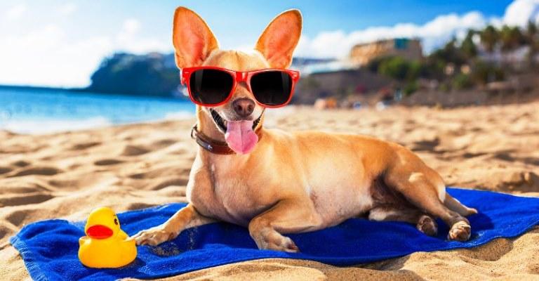 Praias são áreas de risco para cães
