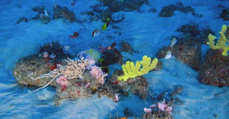 Ibama proíbe exploração em região de corais da Amazônia