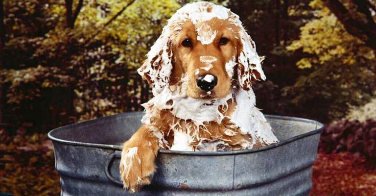 15 dicas para dar banho no seu cachorro em casa