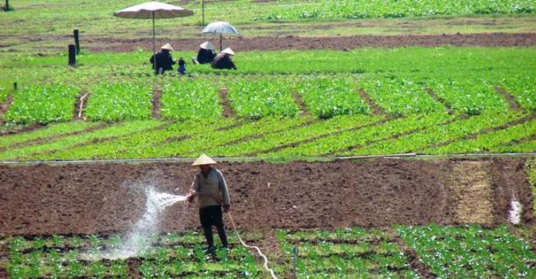 O controverso uso de esgoto na irrigação