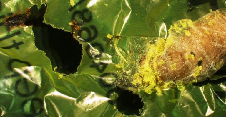 Cientistas descobrem larva que degrada plástico