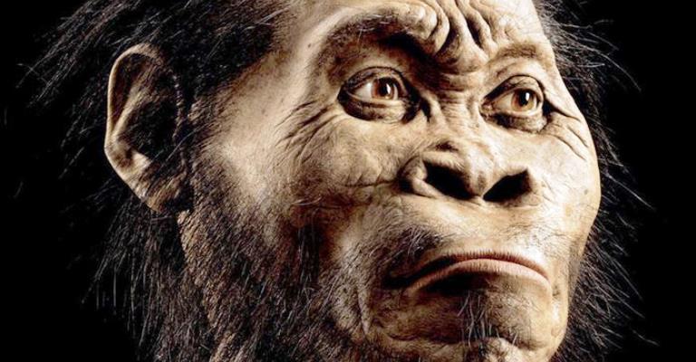 Homo naledi pode ter convivido com humanos