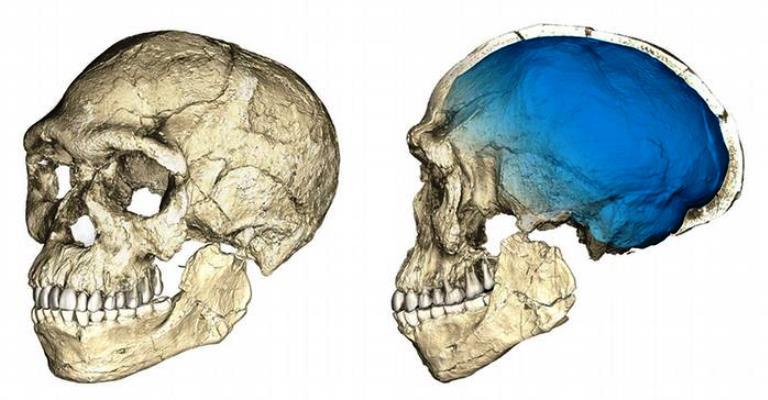 Homo sapiens é mais antigo do que se pensava