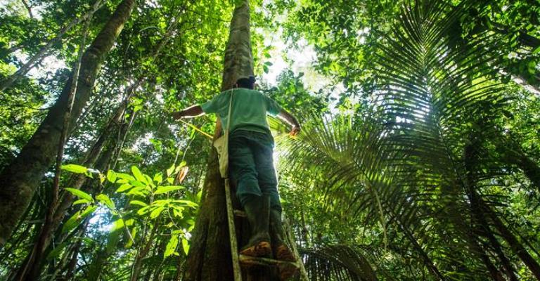 Qual efeito de mais CO2 na atmosfera para Amazônia?