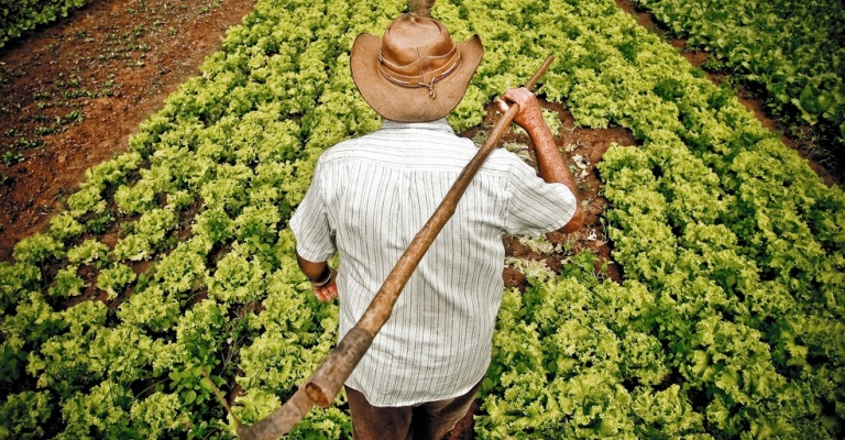 Brasil recebe prêmio internacional de agricultura familiar