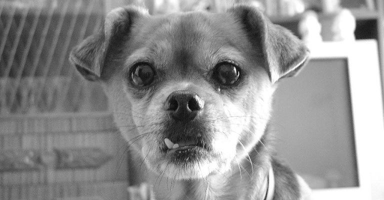 Mais de 400 cães foram adotados no Dia da AdoCÃO