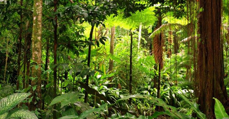 Extrativismo sustentável estimula o equilíbrio natural