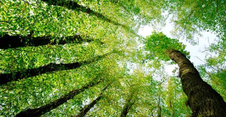 Como garantir a manutenção das florestas?