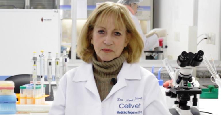 Terapia celular para tratar doenças em felinos