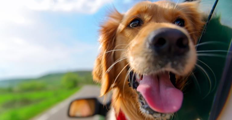 Viagens também exigem cuidados com os pets