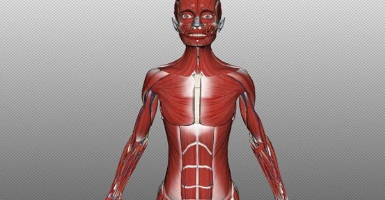 Simulador 3D substitui cadáveres em aulas de anatomia