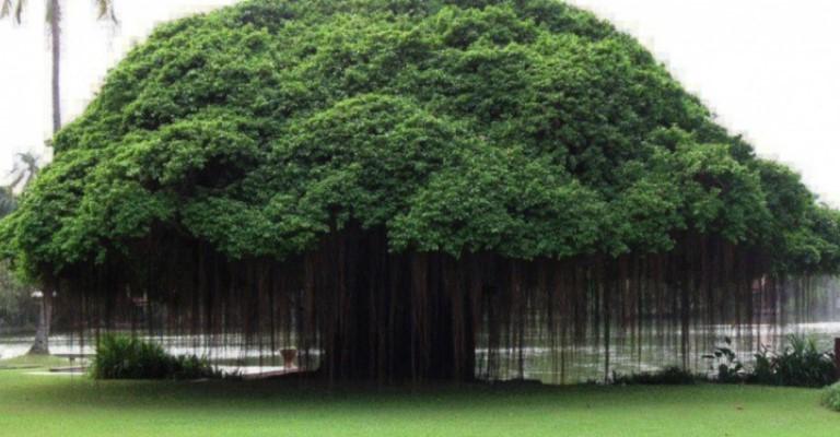 A saúde do planeta depende da preservação das árvores