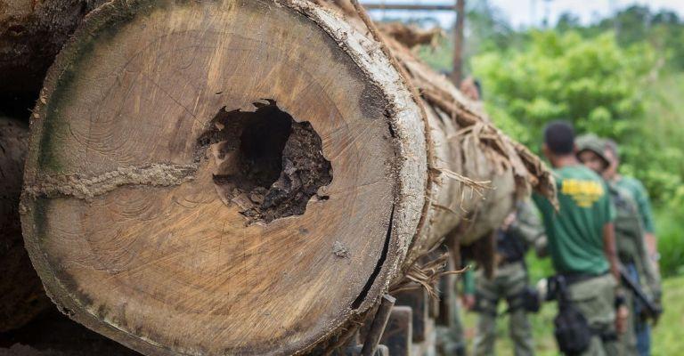 Alertas de desmatamento crescem 223% na Amazônia, segundo Inpe