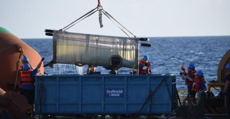 Japão anuncia volta da caça comercial de baleias