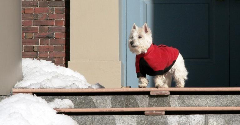 Proteja seu pet do frio. Ele vai te agradecer…