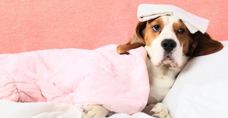 Dicas para prevenir doenças nos pets nesse inverno
