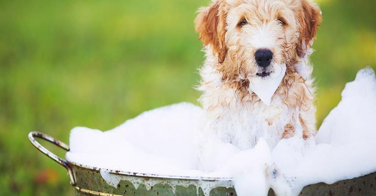 Cuidados ao dar banho em seu animal de estimação