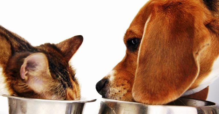 Dieta vegetariana pode causar doenças para pets
