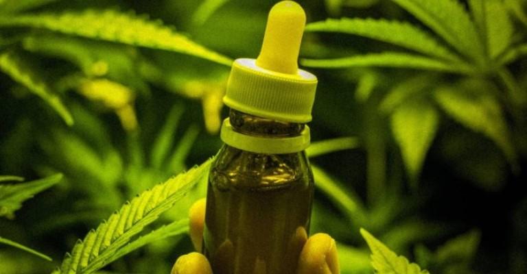 Anvisa libera venda de maconha para uso medicinal