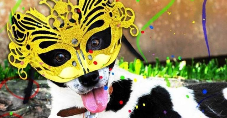 Dicas para curtir o carnaval com seu animal de estimação