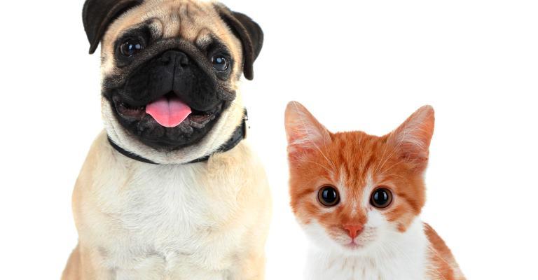 Dicas para evitar intoxicação alimentar nos pets