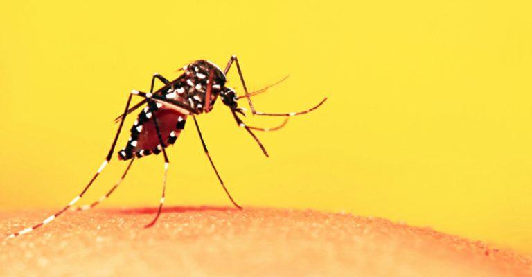 Casos de febre amarela alertam para o desmatamento