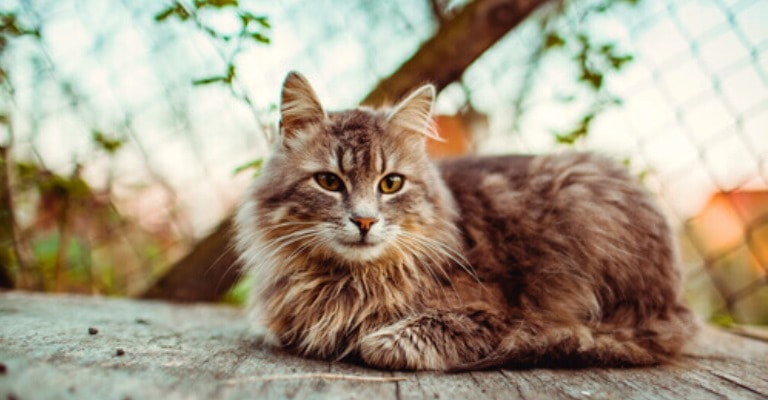 Castração de gatos: antes e depois da cirurgia