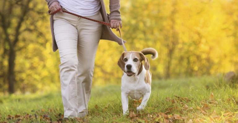 Vínculo com pets é maior em pessoas com problemas de saúde