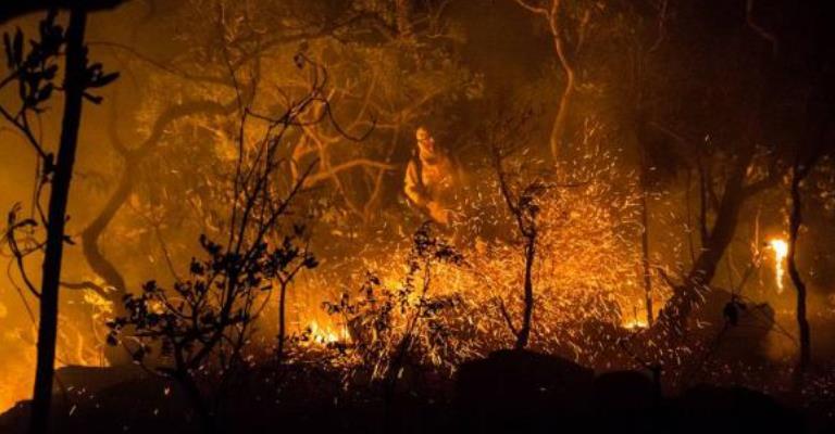 Número de incêndios florestais é o menor em 20 anos