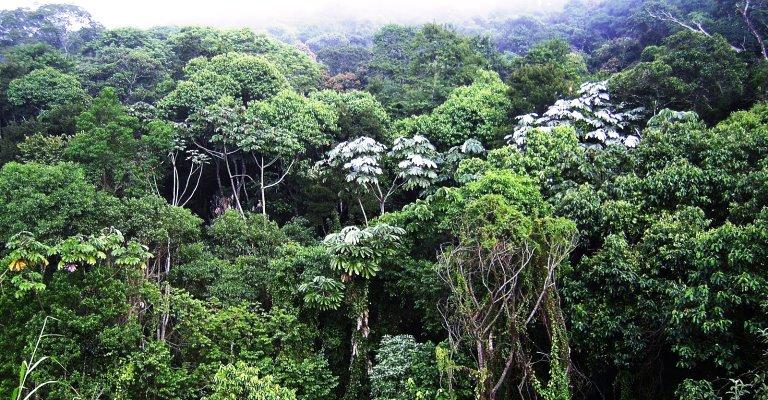 Plano visa proteção da Mata Atlântica em Minas Gerais