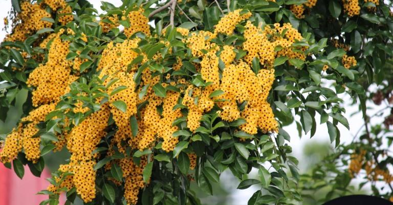 Bahia tem 744 espécies da flora ameaçadas de extinção