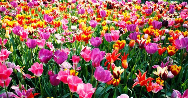 Estação das flores chegano Hemisfério Sul