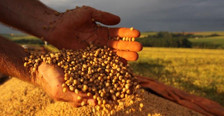 Exportação de soja bate recorde em agosto