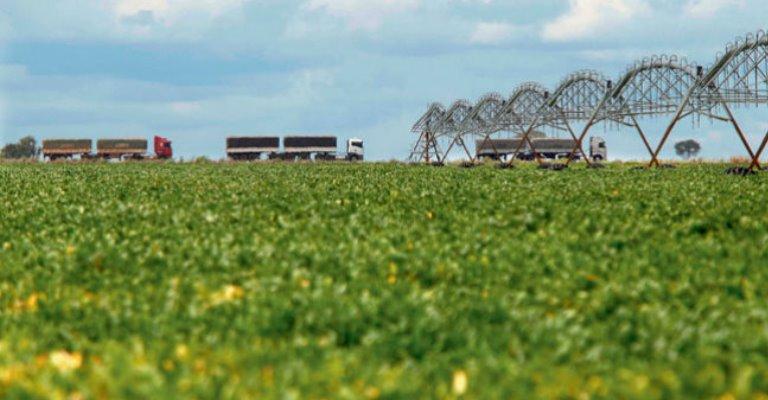 IBGE prevê safra recorde de grãos; 246,7 milhões de toneladas