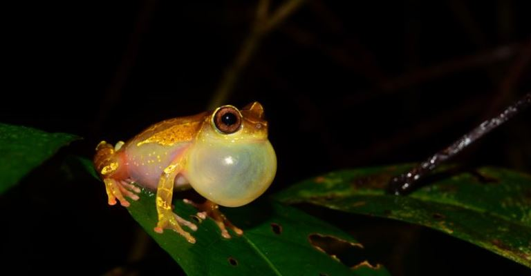 Expedições à Amazônia identificam 12 novas espécies