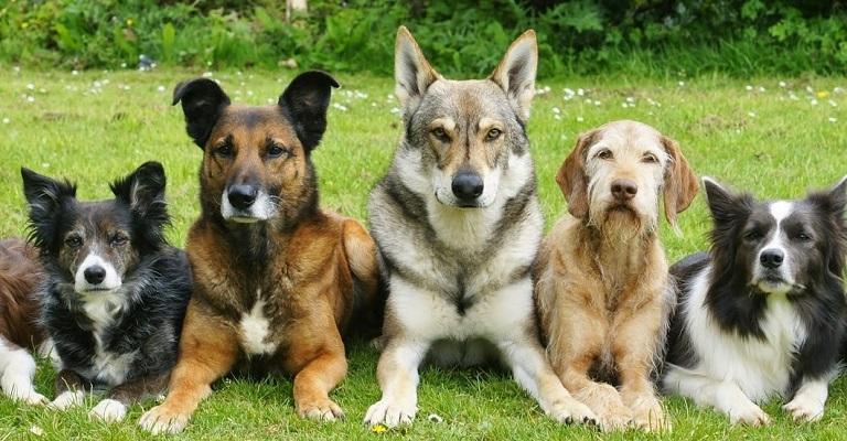 Como cuidar dos cães no verão