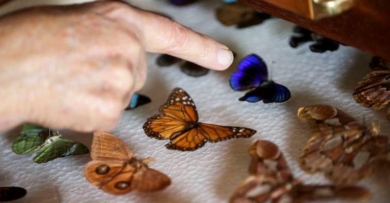 Colecionador doa 2 mil insetos ao Museu Nacional do Rio