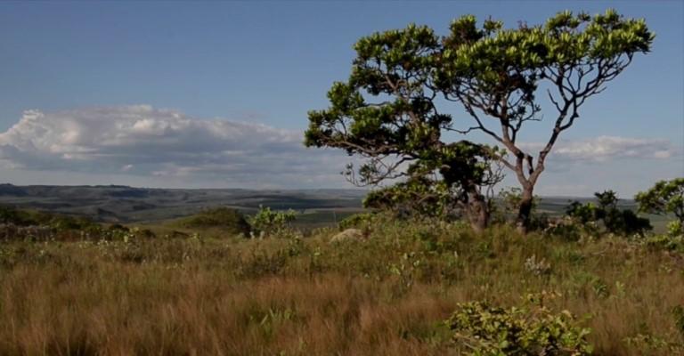 Cerrado tem 5% da biodiversidade do mundo