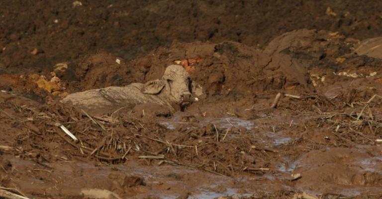 Festival de Tiradentes recebe fotos da tragédia de Brumadinho