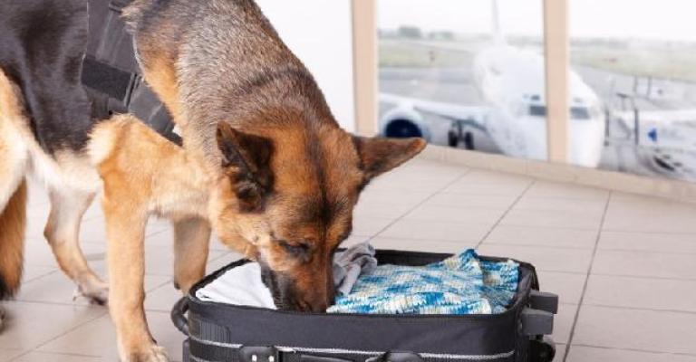 Aeroportos de SP e do RJ terão cães para reforço na fiscalização