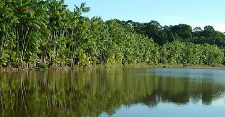 Mata Atlântica tem água boa em apenas 6,5% dos rios
