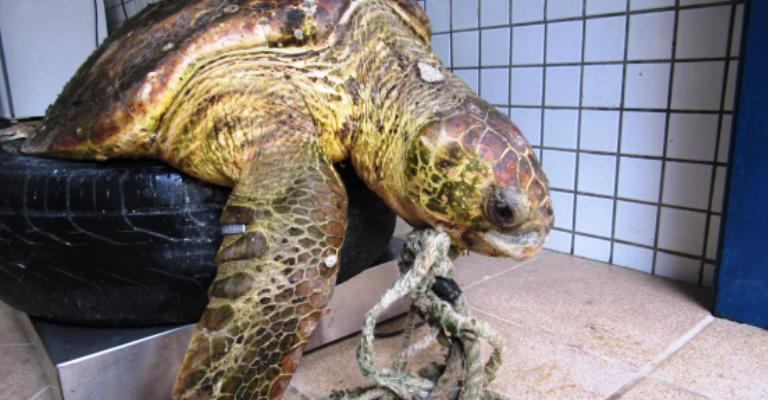 Projeto Tamar devolve ao mar uma tartaruga reabilitada