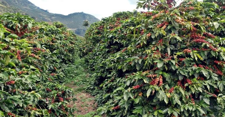 Agronegócio mineiro mantém boa performance de exportação de alimentos