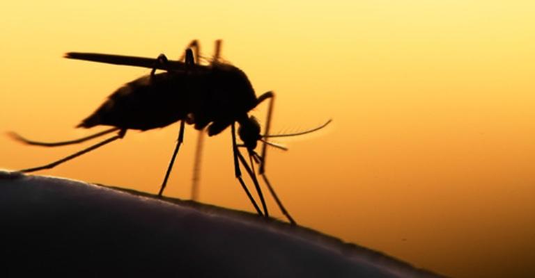 Estudo mostra que erradicação da malária pode ser possível até 2050