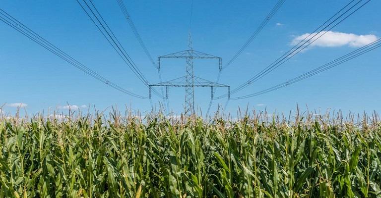 Falta de energia elétrica pode acabar através do uso de bioprodutos