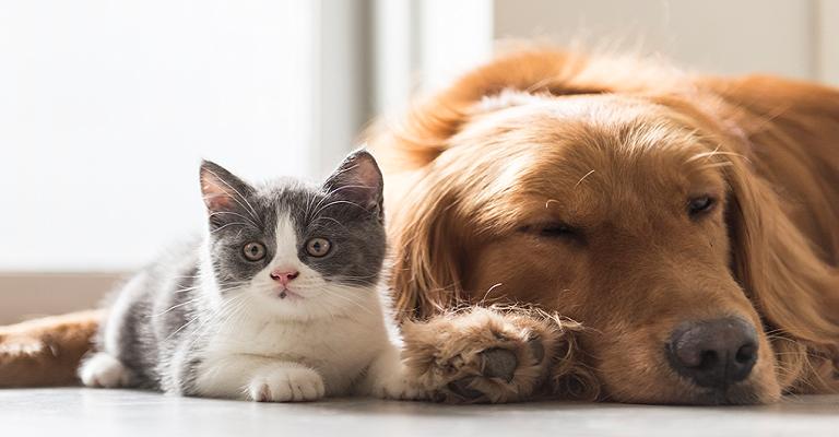 Cães e gatos também passam pela adolescência, explica especialista