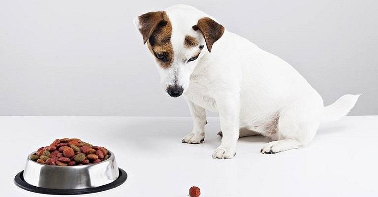 Como escolher a ração ideal para o seu cão